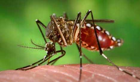 Notificaciones de dengue se registran en todos los departamentos